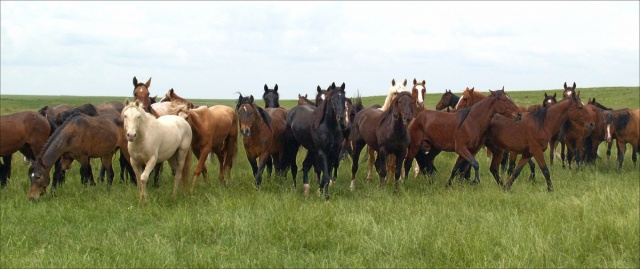 wildhorse_funding_photo1
