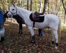 Stormy Paint Arabian Horse