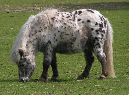 Fat Horse Wikimedia Commons