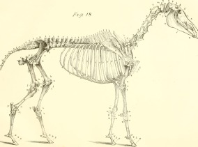 The_anatomy_and_physiology_of_the_horse-_with_anatomical_and_questional_illustrations._Containing,_also,_a_series_of_examinations_on_equine_anatomy_and_physiology,_with_instructions_in_r