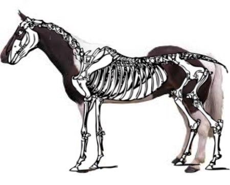 horse-30760_960_720