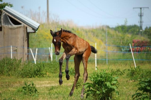 horse-1411469_960_720