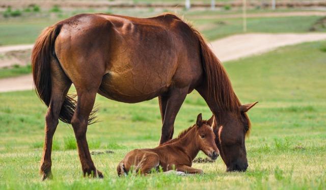 horse-2504676_960_720