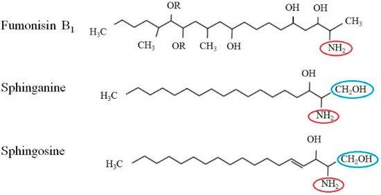 toxins-11-00114-g001-550