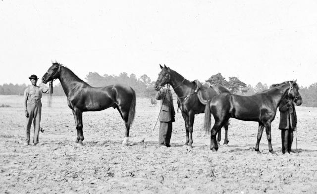 grant27s_horses