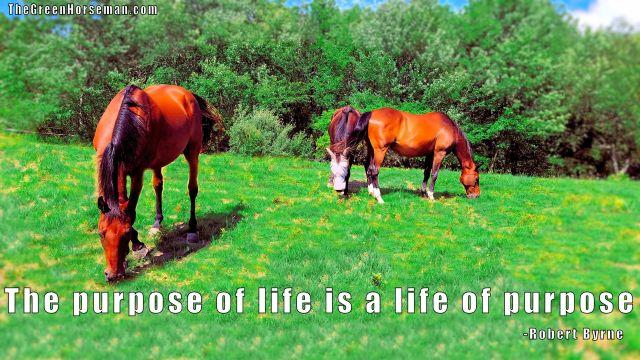 LifePurpose.jpg